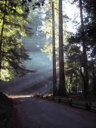 light therapy for ptsd is your ptsd therapy giving you the results you want healthy place