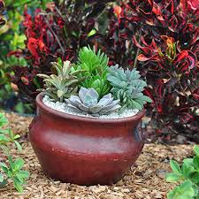 Container Gardening Ideas Container Gardening Ideas With Succulents Costa Farms