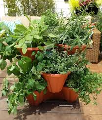grow a container vegetable garden on your patio tips the foodie
