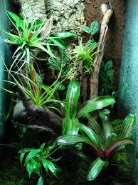 83 best paludarium ideeën images on pinterest terrariums plants