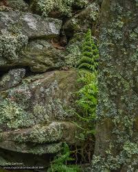 ellsworth rock gardens in voyageurs national park minnesota