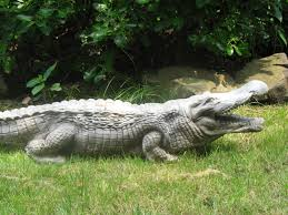 alligators outside images search