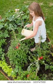 gorgeous watering vegetable garden vegetable garden lovely