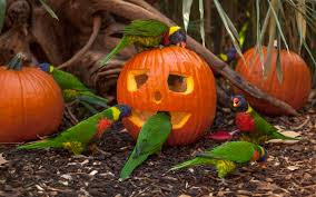 Halloween Express Nashville Tennessee by Nashville Zoo At Grassmere Nashville Tn
