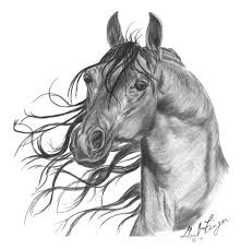 horse sketches and drawings of mine by horse runs wild on deviantart