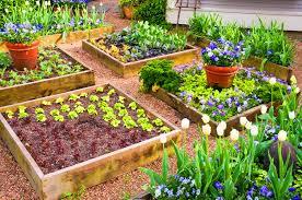 bed gardening starter guide