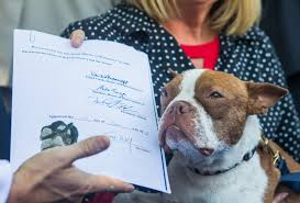 pennsylvania protects its pups the passage of libre u0027s law