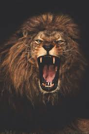 best 25 roaring lion tattoo ideas on pinterest roaring lion