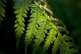 tree fern wallpapers high quality download free