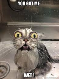 Wet Meme - you got me wet cat bath make a meme