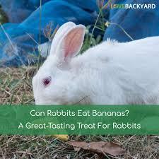 can rabbits eat bananas a great tasting treat for rabbits nov 2017