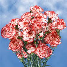 carnation flowers cheap christmas color spray carnation flowers global