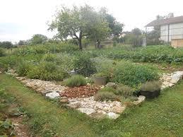 sarriette cuisine mon coin d herbes aromatiques 6 la sarriette le jardin de