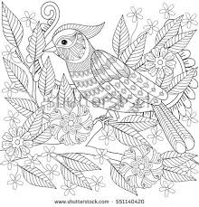 hand drawn parrot coloring stock vector 500407711 shutterstock