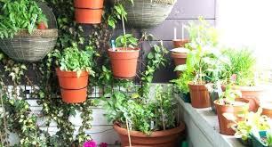 floor plants home decor floor plants home decor sougi me