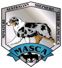 australian shepherd needs australian shepherd arizona multi nationals top blue ribbon breeder