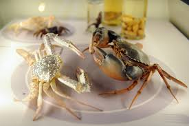 a single name for 4 species of swimming crabs singapore news