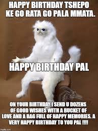 Persian Cat Meme - persian cat room guardian single meme imgflip