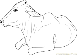 cow take sunbathing coloring page free cow coloring pages