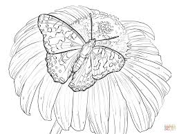 painted lady butterfly sits on a flower coloring page free