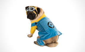 costumes for dogs 55 cool pet costumes for dogs of all sizes dog costume ideas