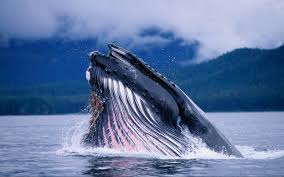 2560x1600 free high resolution wallpaper whale download awesome