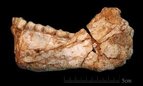 Oldest Flag In Europe Oldest Fossils Of Homo Sapiens Found In Morocco Altering History