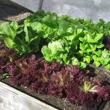 Fall Vegetable Garden Ideas by 3021 Best Good Garden Ideas Images On Pinterest Gardening