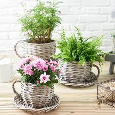 willow teacup planter gardening gift by ella james