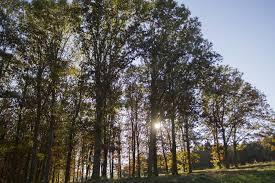 tree care resources nebraska forest service