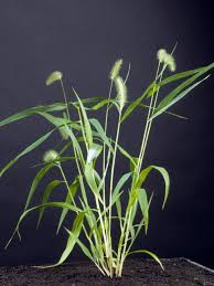 types of native plants types of weeds hgtv