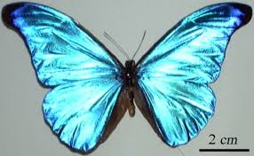 advanced optics on butterfly wings