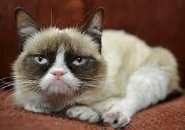 Tardar Sauce Meme - grumpy cat has bitchy resting face buildmybod