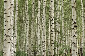 Wohnzimmer Deko Natur 35 Ideen Für Birkenstamm Deko Bringen Sie Die Natur In Ihre
