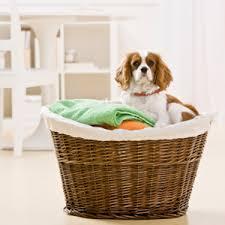 nettoyer pipi de chien sur canap animaux 8 solutions maison pour nettoyer leurs dégâts
