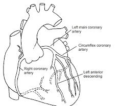 normal coronary arteries pediatric heart specialists