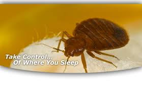 How Often Do Bed Bugs Reproduce Bed Bug Control In Central Illinois American Pest Control Pest