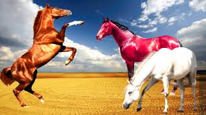 colourful color horse videos horse cartoon learn horses for kids