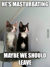 Scared Cat Meme - scared cats 9gag