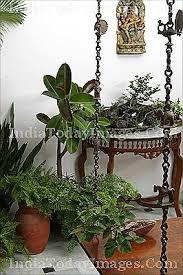 indoor plants india buy indoor plants image india today images