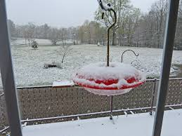 in crossville tn snow on april 15th hits crossville tennessee feederwatch