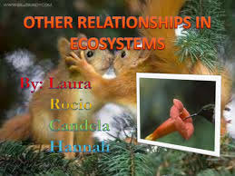 relationships in an ecosystem mutualism comensalism and parasitism