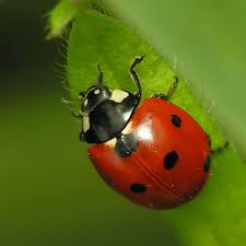 Small Red Bugs On Patio by News Oakes Garden Design