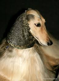 afghan hound index of dog breeds afghan hound images full