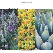 amazon succulents sedums succulents crassula nature u0027s wonders succulents
