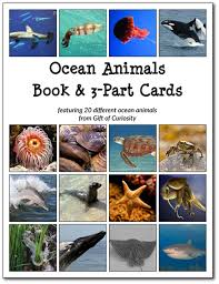 animals book 3 part cards gift of curiosity