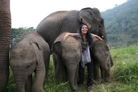 Blind Men And The Elephant Story For Children Meet Thailand U0027s Elephant Whisperer Cbs News