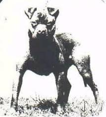 american pitbull terrier game bred bloodlines ofrn history
