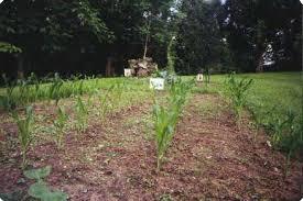 how to start a vegetable garden ways2gogreen com
