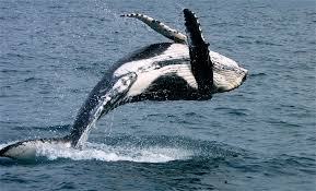 whale pictures kids search
